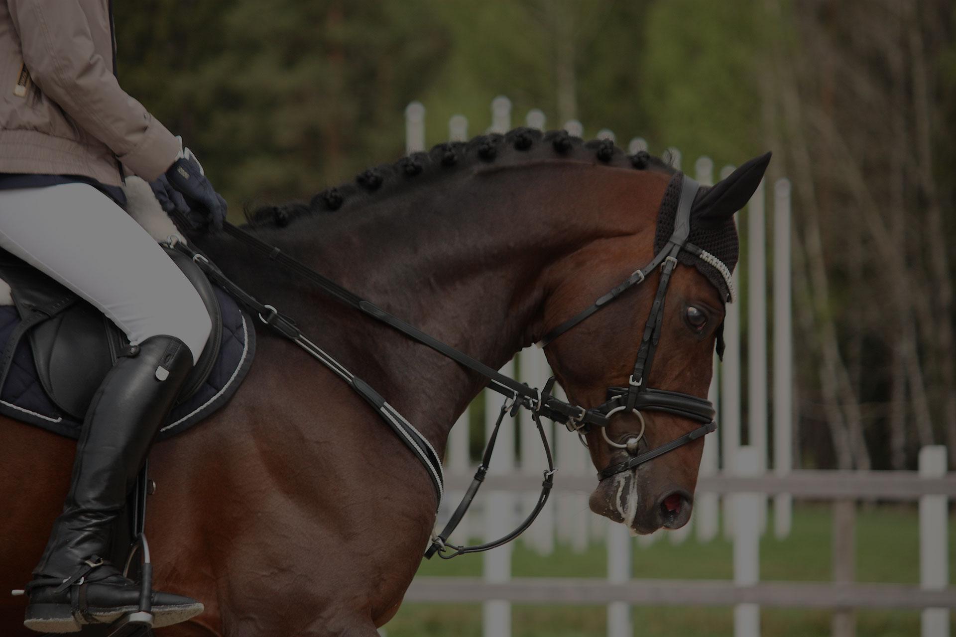 Beautiful sport horse portrait in horse show