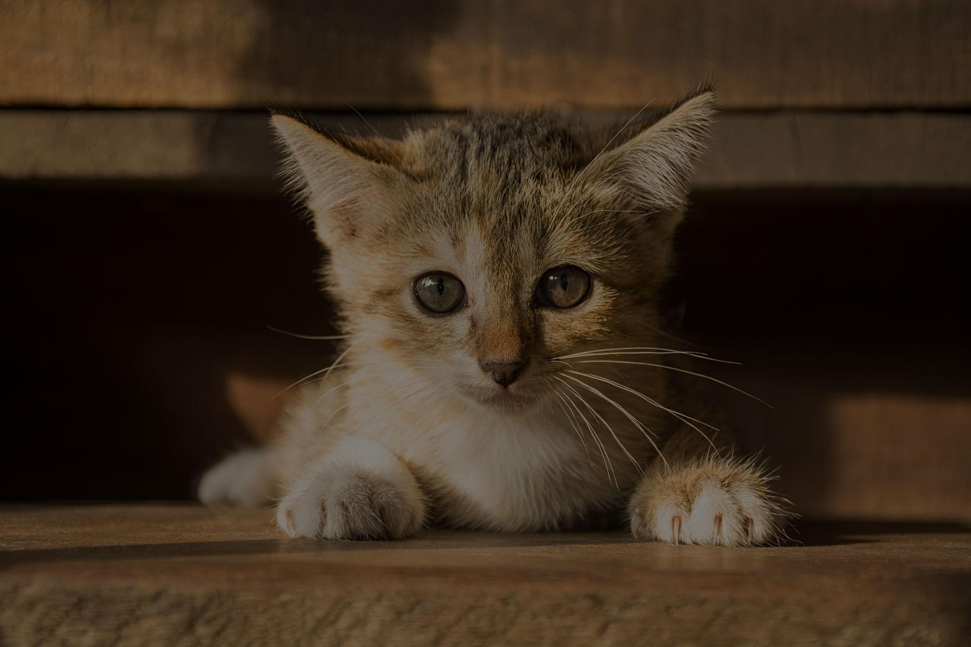 the cute cat in morning,cute cat alone , cat sad,Kitten,cat