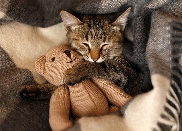 Kitten with Teddy