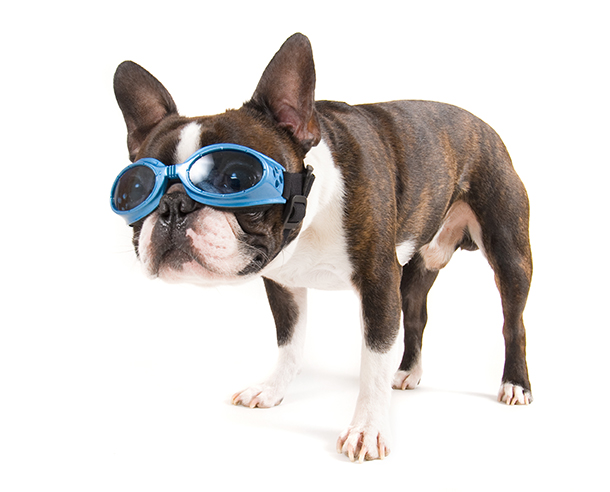 dog with goggles on copy