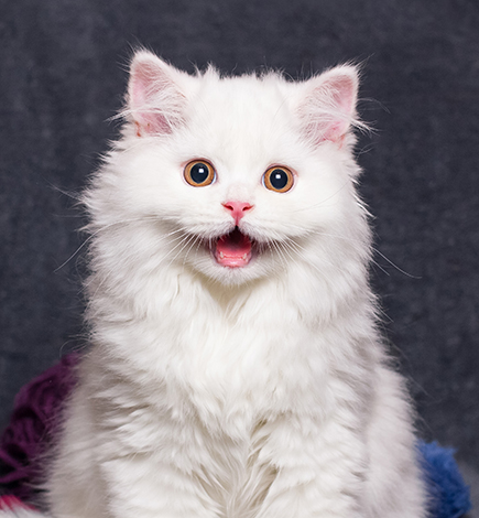kitten with yarn balls